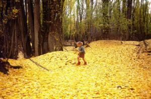Our son Guy in autumn wonderland, Cromwell 1978