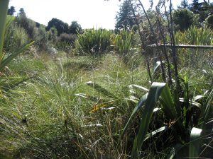 The wetlands at Mt Bruce National Wildlife Centre were quite nice.