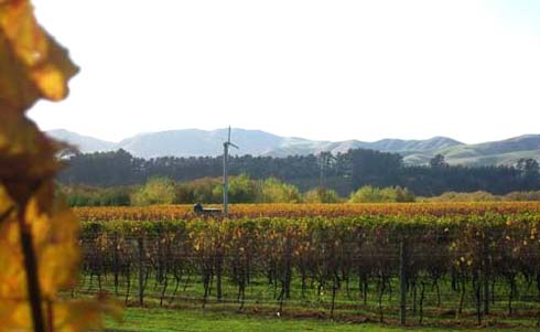Across the road from the Margrain Vineyard.