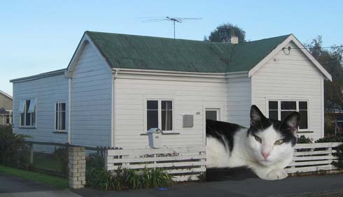 Felix outside his real home. He much preferred our place.