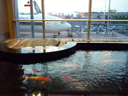 Looking over huge carp towards Singapore Airlines planes, Terminal 3.