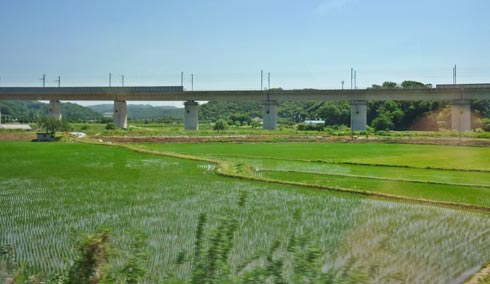 Fast train track seen from the slow train track. Paddy fields and other intensive agriculture and horticulture covered every available corner of space not occupied by roads and buildings. Certainly no outdoors livestock farming could be seen.