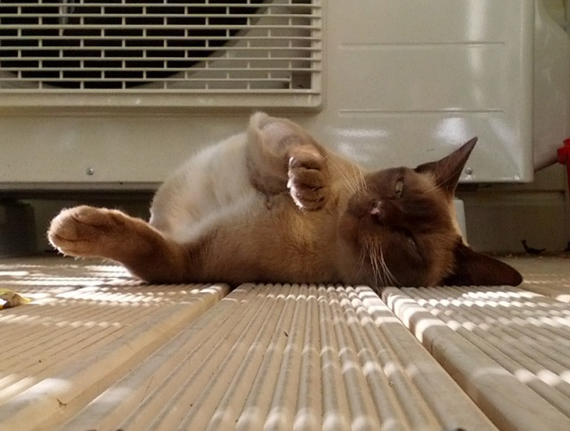 Chino-in-front-of-aircon-unit