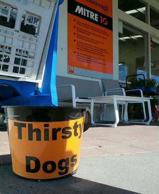 Thirsty-dogs