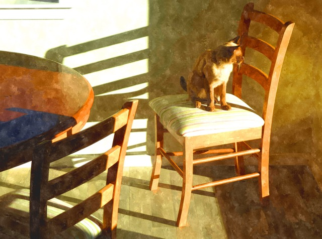 Chino-on-chair---watercolour-filter