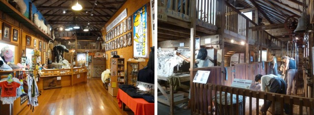 Inside the museum. At left is the entrance which includes a woollen goods shop and the Golden Shears Hall of Fame. On the right is a replica shearing board and a shed hand throwing a fleece.