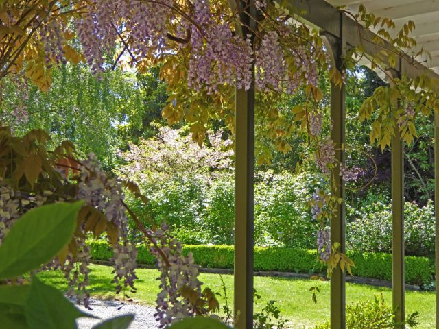 Wisteria on the veranda, Abbotsford Garden.
