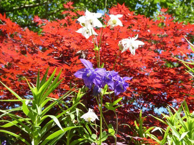 Texture and colour, Abbotsford Garden.