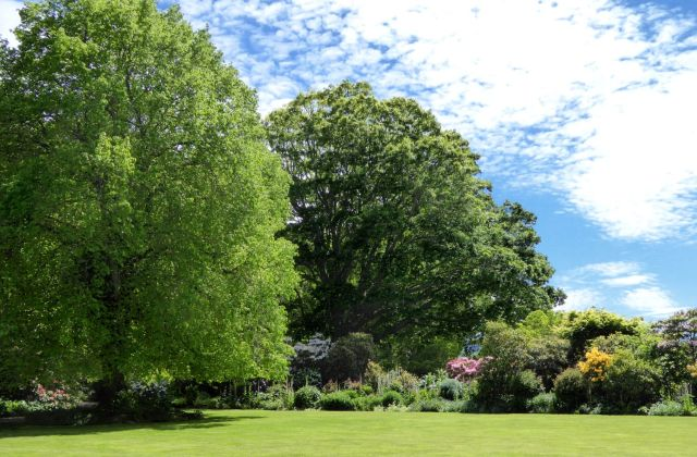 Sweeping lawns and long-established trees are a feature of Fernside. The large tree on the left is a linden.