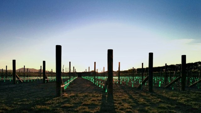 Devotus-Vineyard-plantings800pixels
