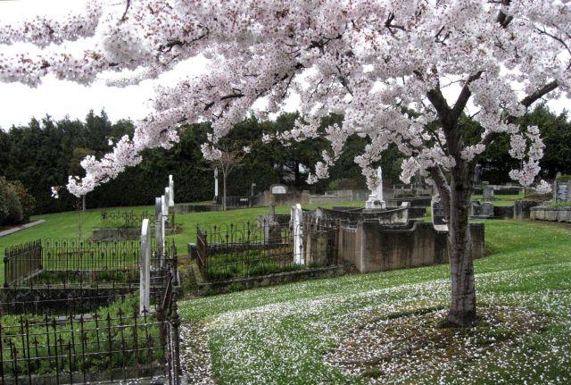 Mataura Cemetery, NZ, 2007